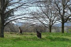 camerata_Australia2014-2_0004